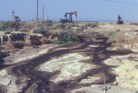 discarded decades grow vegetation pollutants enter soil rain water bodies